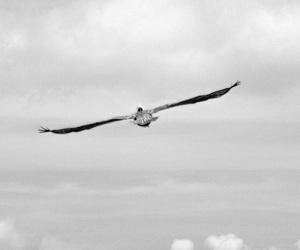aguia, mar, and sea image