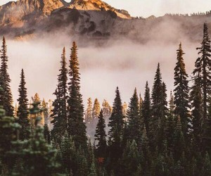 mountains, forest, and fog image