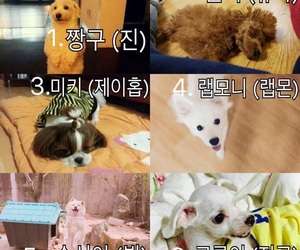 dogs, v, and cute image