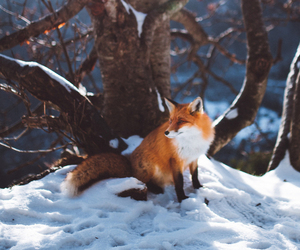 analog, fox, and hipster image