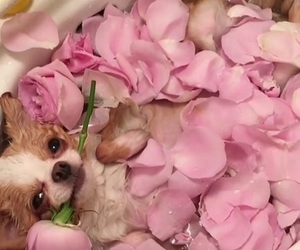 dog, rose, and bath image