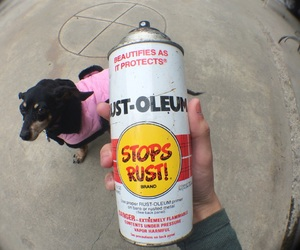 art, dogs, and graffiti image