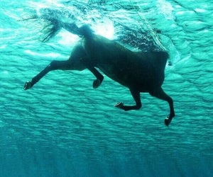 horse, sea, and water image
