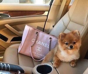 dog, chanel, and car image
