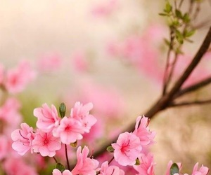 flowers, background, and flores image