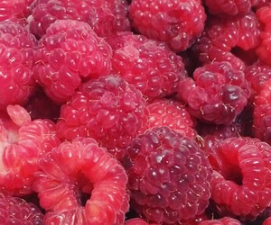 blackberries, fruit, and fit image