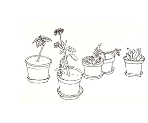 drawing, plants, and header image