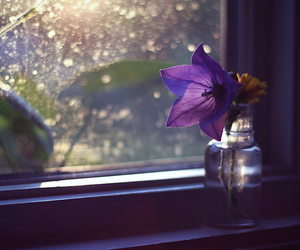 flower and window image