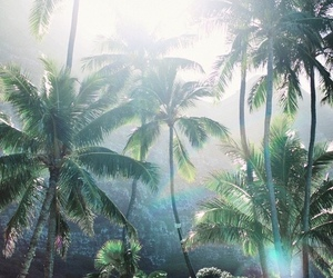 summer, jungle, and forest image