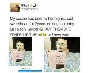 announcement, baby, and dog image