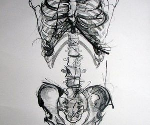 skeleton, bones, and art image