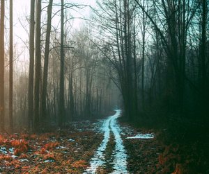 fog, morning, and path image