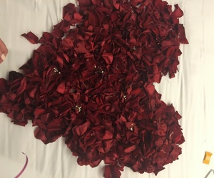 rose petals, roses, and sweet image