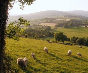 belfast, ireland, and sheep image