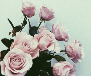 awesome, beautiful, and rose image