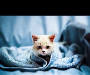cuties, kittens, and kitties image