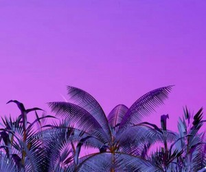 purple and palms image