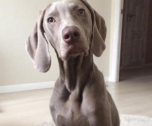 cuteness, dog, and cute image