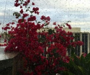 flowers, rain, and red image