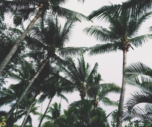 palm trees, green, and photography image