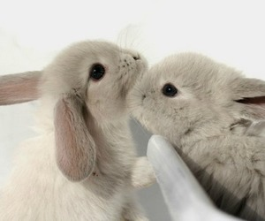 bunny, cute, and rabbit image