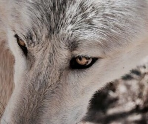 wolf and aesthetic image