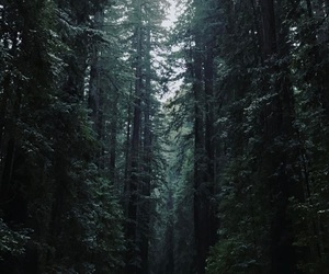 forest, green, and saturday image