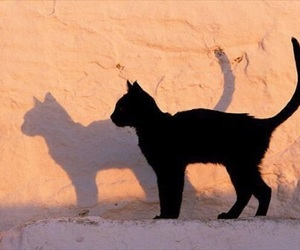 animal, black, and photography image