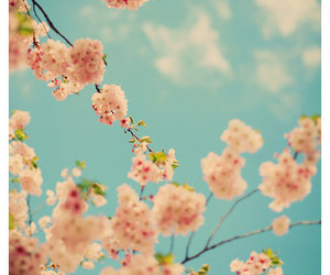 pink, blue, and spring image