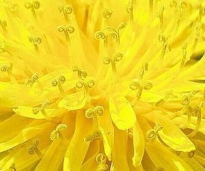 flowers, macro, and yellow image