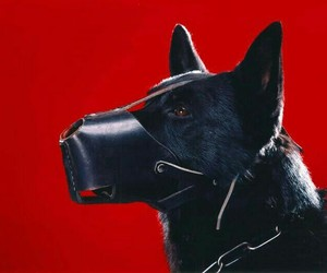 dog, red, and black image