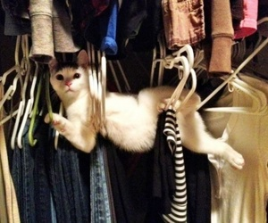 animals, clothes, and kitties image