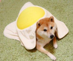 animals, dog, and egg image