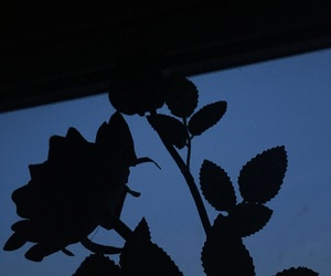 beautiful, my picture, and rose image