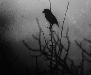 bird, black and white, and dark image