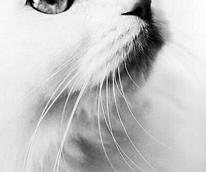 cat, black and white, and white image