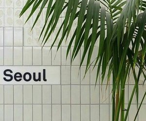 seoul, aesthetic, and plants image
