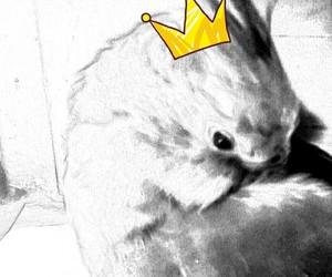 Animales, pajaro, and boceto image