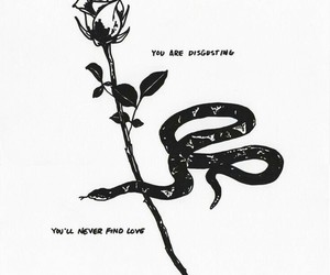 rose, snake, and love image