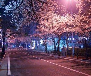 pink, japan, and night image