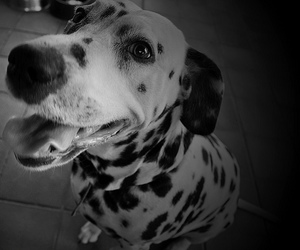 black and white, Elle, and spots image