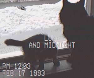 1993, camera, and cats image