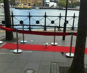 funny, seagull, and red carpet image