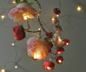 aesthetic, lights, and rose image
