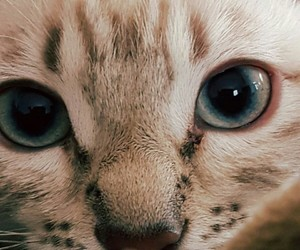 cat, cat eyes, and cute image