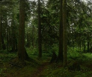 forest, freedom, and life image
