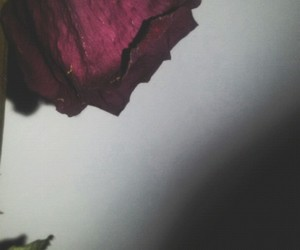 art, rose, and tired image