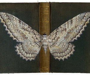 art, book, and butterfly image
