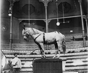 circus, cirkus, and hästar image