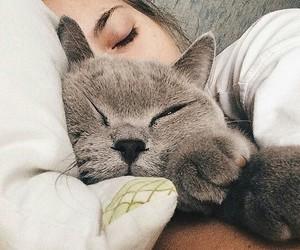 cat, sleep, and cute image